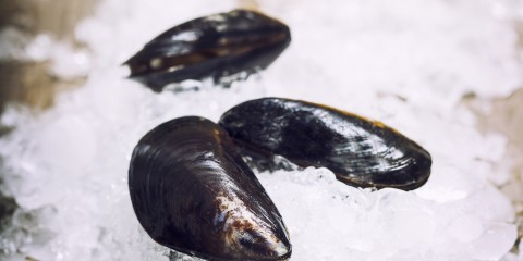 Fresh  mussels on ice ready for cooking