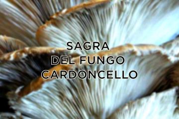 sagra fungo cardoncello